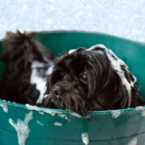 Aseo y Grooming Para Perros